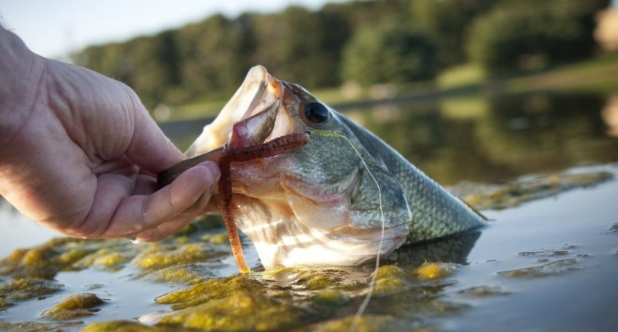 Best Lures To Use for River Fishing
